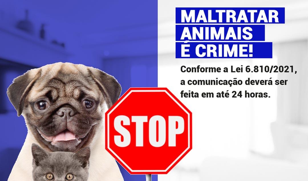 Lei que obriga condomínios a denunciarem maus-tratos a animais